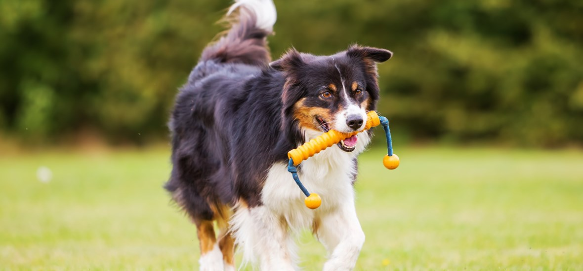 Which sport to practice with your dog by Perfect Fit