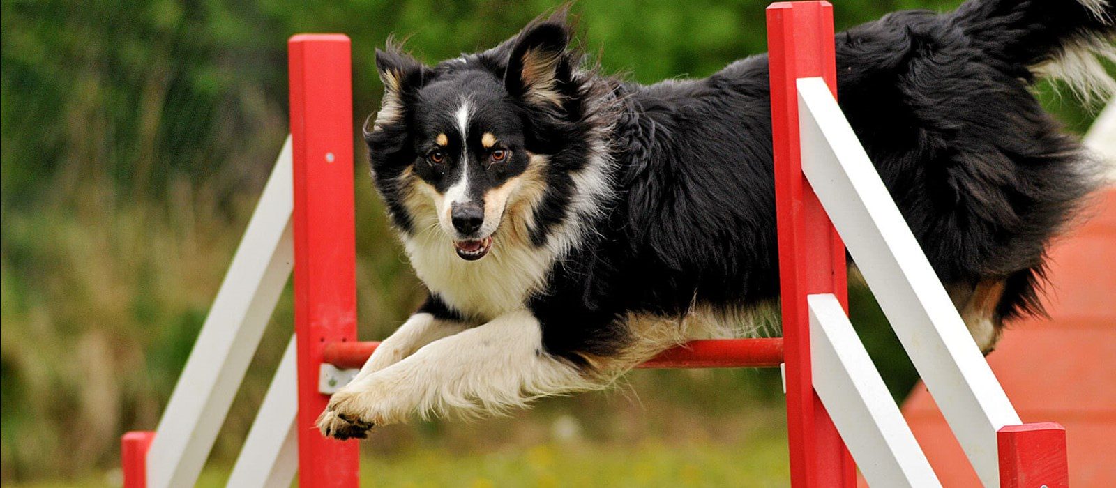Dog Breed and exercise by Perfect Fit