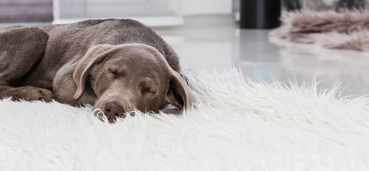 Understanding your puppy's sleeping needs