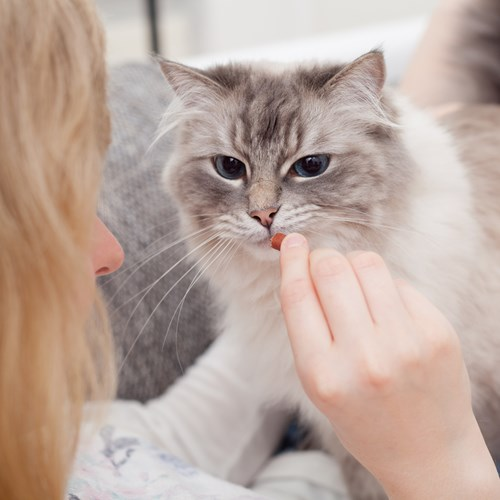 Perfect Fit tips to deepen your bond with your pets though positive learning