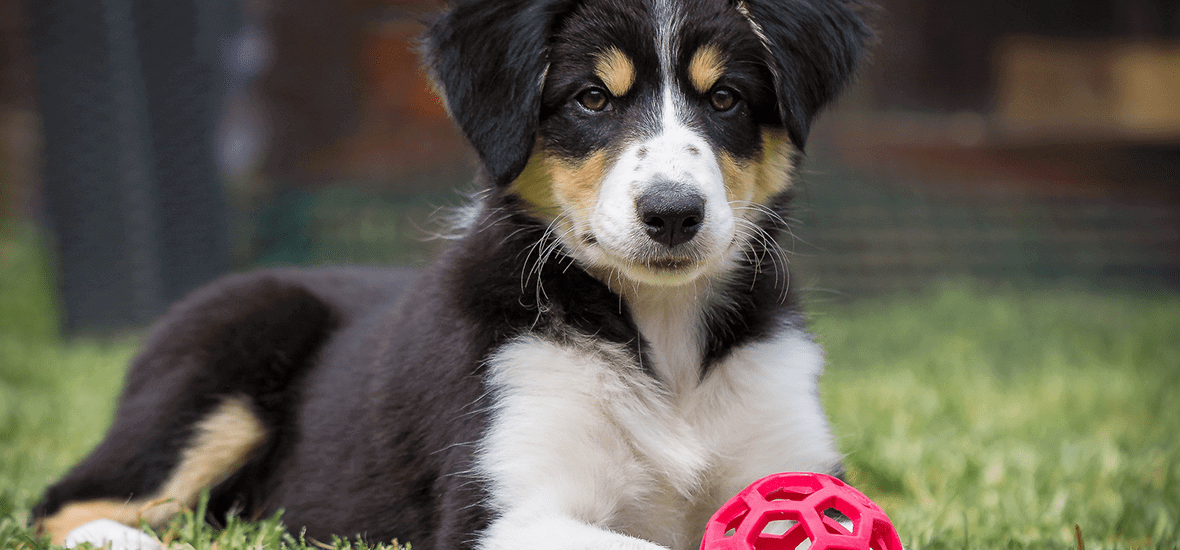 Perfect Fit tips to choose the right toy for your puppy